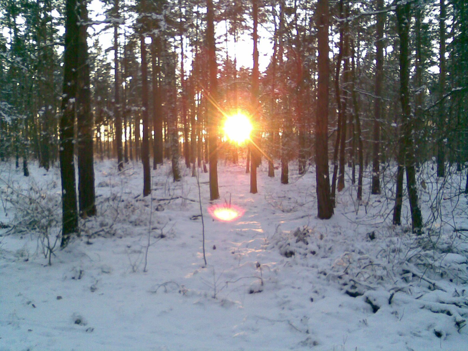 Sonnenuntergang Grunewald