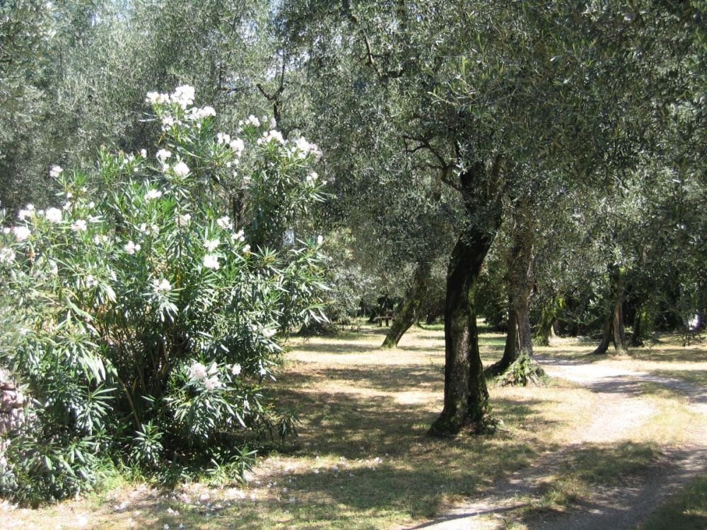 03_olivenhain