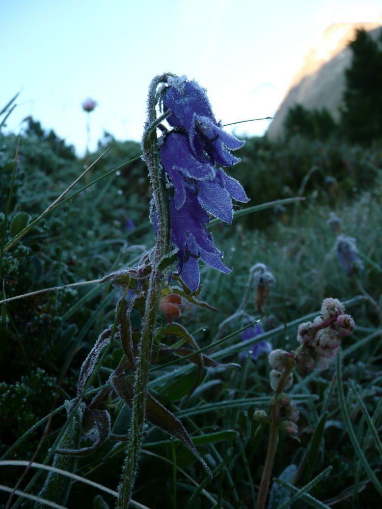 Reif auf den Blumen am frühen Morgen.